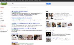 Cat Google Search