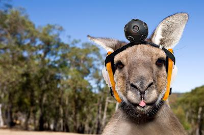 google-kangaroo